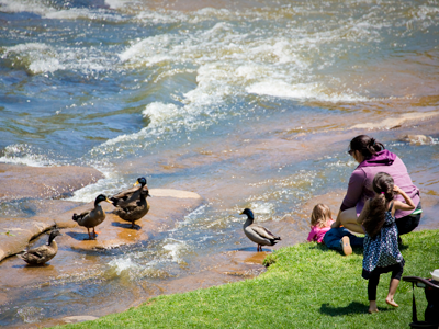 ducks in Falls Park